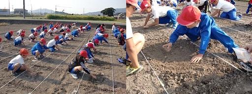 播種、耕し中.jpg